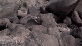Een kudde van geiten dichtbij de rivier stock videobeelden