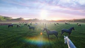 Een kudde van jonge paarden weidt op een schilderachtige groene weide op een mooie de zomerochtend, die door de Gouden stralen wo stock videobeelden