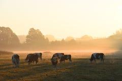 Een kudde van koeien royalty-vrije stock fotografie