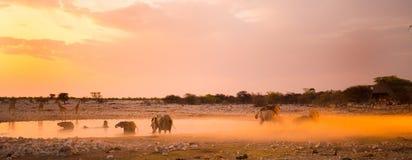 Een kudde van olifanten bij zonsondergang naast een waterhole Stock Afbeelding