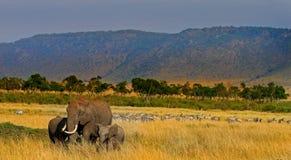 Een kudde van olifanten op de vlaktes in masai mara Stock Foto