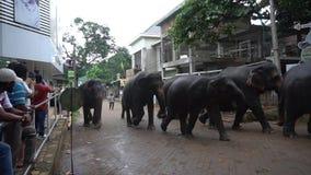 Een kudde van olifanten stock video