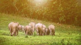 Een kudde van olifantenvolwassenen en welpen die terug naar bos i lopen Stock Afbeelding