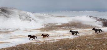 Een kudde van paarden Royalty-vrije Stock Foto