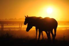 Een kudde van paarden bij dageraad Stock Afbeeldingen