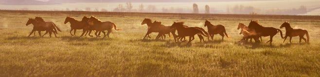 Een kudde van paarden bij zonsopgang stock foto's