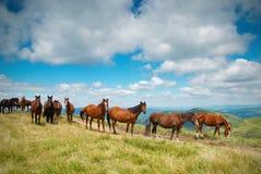 Een kudde van paarden in de bergen Royalty-vrije Stock Foto's