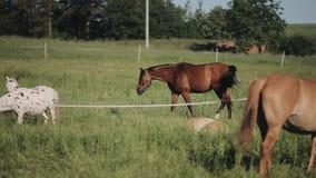 Een kudde van paarden in het landbouwbedrijf stock videobeelden