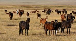 Een kudde van paarden met jonge veulennen Royalty-vrije Stock Foto's