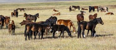 Een kudde van paarden met jonge veulens Royalty-vrije Stock Foto