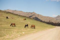 Een kudde van paarden op weiland Stock Foto