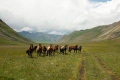 Een Kudde van Paarden in Tien Shan Mountains Royalty-vrije Stock Fotografie