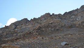 Een kudde van Pyrenean pirenaica van gemzenrupicapra in het Posets-massief, de Spaanse Pyreneeën royalty-vrije stock foto's