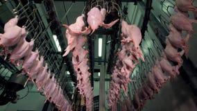 Een lage hoekmening over een kippenverwerkingsinstallatie op het werk stock video
