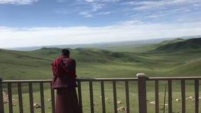 Een lama bidt bij de eindeloze prairie royalty-vrije stock afbeeldingen