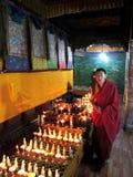 Een lama is in de Tempel van de Teer Stock Foto's