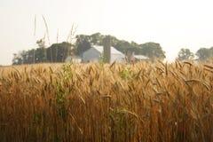 Een landbouwbedrijf Royalty-vrije Stock Foto's