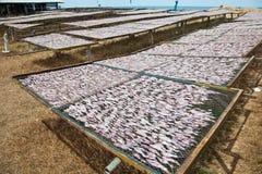 Een landbouwbedrijf van de Pijlinktvis Stock Foto's