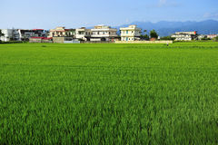 Een landbouwbedrijf van het Land Royalty-vrije Stock Afbeeldingen
