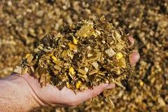 Een landbouwer die gouden, vergist graankuilvoeder klaar houden te voeden royalty-vrije stock foto's