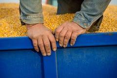 Een landbouwer in een hoogtepunt van de tractoraanhangwagen van graan Stock Foto