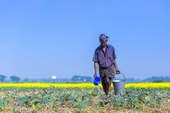 Een landbouwer geeft op zijn gebieden van de auberginesaanplanting water in Sirajdhikha, Munshigonj, Dhaka, Bangladesh royalty-vrije stock afbeeldingen