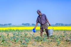 Een landbouwer geeft op zijn gebieden van de auberginesaanplanting water in Sirajdhikha, Munshigonj, Dhaka, Bangladesh stock foto
