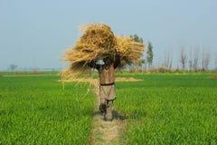 Een landbouwer het geven gras Royalty-vrije Stock Foto