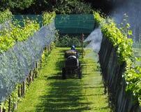 Een landbouwer met beschermend kostuum, op een landbouwvoertuig, bespuit chemische ongediertebestrijding op de wijngaarden stock fotografie