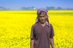 Een landbouwer op volledig bloeiend mosterdgebied in Sirajdhikha, Munshigonj, Dhaka, Bangladesh Stock Foto's