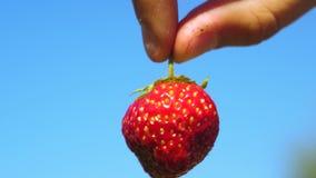Een landbouwer toont rode aardbeien met een bebouwd plan tegen een blauwe hemel de tuinman verzamelt rijpe bes de landbouwer toon stock videobeelden
