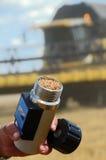 Een landbouwkundige houdt een tarwe in hygrometer Stock Foto's