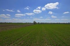 Een landelijk landschap Royalty-vrije Stock Afbeelding