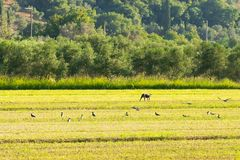 Een landelijk landschap met een hond bij een landbouwbedrijf met vogels die rond vliegen Royalty-vrije Stock Foto's