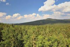 Een landschap met bossen royalty-vrije stock afbeeldingen