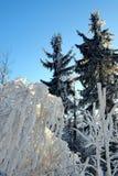 Een landschap met rijp in de winter Stock Afbeeldingen