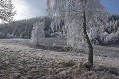 Een landschap van de vorstwinter Royalty-vrije Stock Fotografie