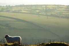 Een landschap van Liskeard-heiden, Cornwall, het UK Stock Foto's