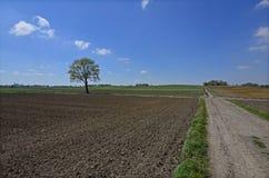 Een landweg Stock Fotografie