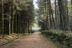 Een landweg door de Schotse hooglanden stock foto's