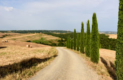 Een landweg in Val d& x27; Orcia met een rij van cipresboom stock foto
