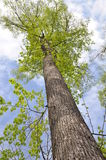 Een lange boom in het park Royalty-vrije Stock Foto