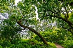 Een lange boom windt zijn manier tot de boomluifel om lig te vangen royalty-vrije stock foto's