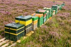 Een lange rij van houten bijenkorven op een bloeiend heidegebied stock fotografie