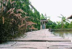 Een lange weg van houten die brug met natuurlijke pool en installatiebomen wordt omringd stock afbeelding
