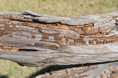 Een langzaam rottend logboek Royalty-vrije Stock Fotografie