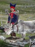 Een Laplander in traditionele kleding die zijn rendier in Noord-Noorwegen voeden tijdens de middernachtzon Royalty-vrije Stock Foto