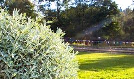 Een Lavendel en The Sun Royalty-vrije Stock Afbeeldingen