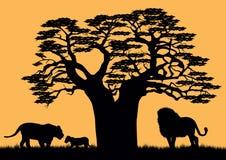 Een leeuw en een leeuwin dichtbij de baobab Royalty-vrije Stock Afbeeldingen