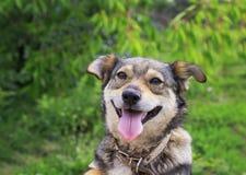 Een leuk bruin puppy die uit in de tuin op een achtergrond gluren van stock afbeeldingen